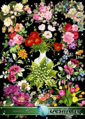 Нарисованные цветы, букеты и цветочные композиции на прозрачном фоне для ди ...
