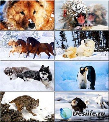 Сборник обоев - Животные зимой #194