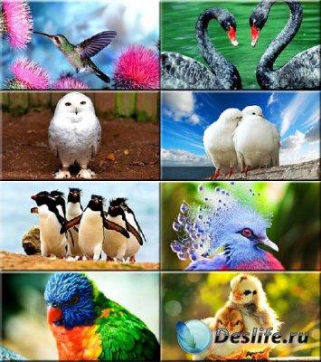 Сборник обоев - Касивые птицы #299