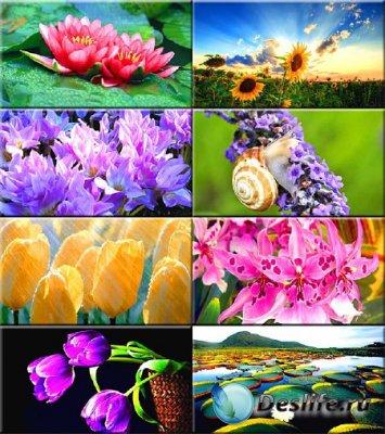 Обои на рабочий стол - Красивые цветы #121