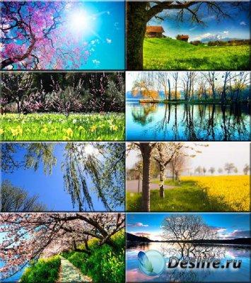 Обои для рабочего стола - Прекрасная пора весна #165