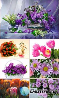 Обои для рабочего стола красивые цветы. Часть 25