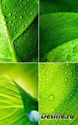 Зеленые листья под дождем