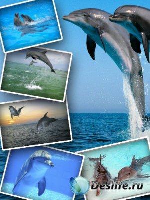 Большая подборка красивых дельфинов