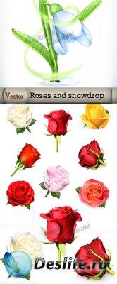 Подборка векторного клипарта – Розы и нежный подснежник