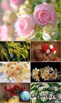 Обои для рабочего стола красивые цветы. Часть 27
