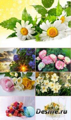 Обои для рабочего стола красивые цветы. Часть 28