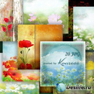 Цветочные фоны для дизайна - Полевые цветы