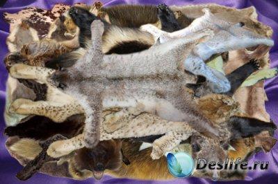 Клипарт Шкуры диких животных