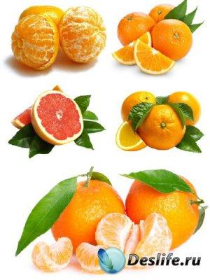 Апельсин и мандарин (подборка изображений цитрусовых)
