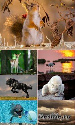 Обои для рабочего стола Животный Мир. Часть 17