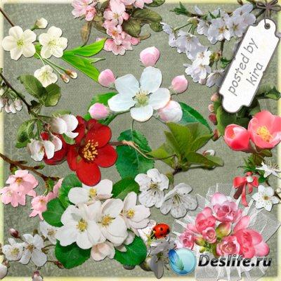 Клипарт - Цветущие яблони, вишни и сакура на прозрачном фоне