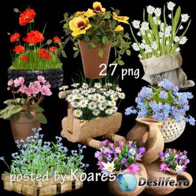 Садовые и комнатные цветы в корзинах, вазонах, горшках - клипарт без фона д ...