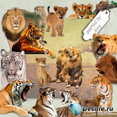 Клипарт без фона - Тигры, львы, гепарды и другие кошачьи
