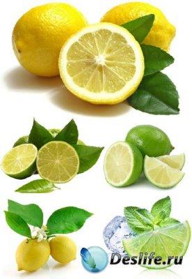 Кислый лимон и лайм (подборка цитрусового клипарта)