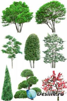 Деревья и кустарники (подборка изображений) прозрачный фон