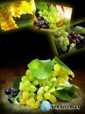Виноград и виноградные гроздья (подборка изображений)