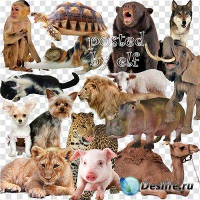 Разные животные на прозрачном фоне