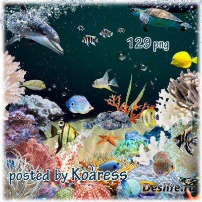 Клипарт для коллажей на тему коралловый риф - кораллы, водоросли, тропическ ...