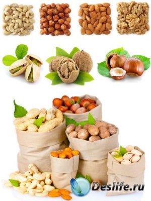 Орехи (большая подборка) грецкий, кокосовый, лесной, фундук, кешью, миндаль ...