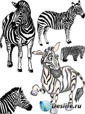 Зебра (животные в векторе)