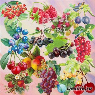 Подборка клипарта в PNG - Спелая ягода