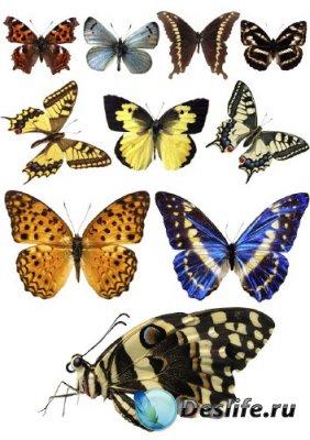 Насекомые: Бабочки и мотыльки (прозрачный фон)