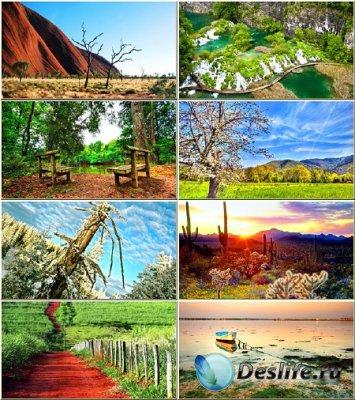 Красочные обои - Нежная красота природы #297