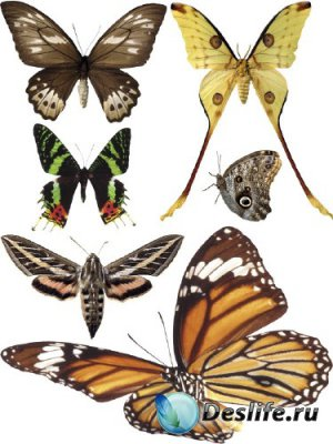 Насекомые: Бабочки и мотыльки (прозрачный фон) вторая часть