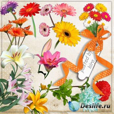 Клипарт в png - Герберы, лилии и хризантемы