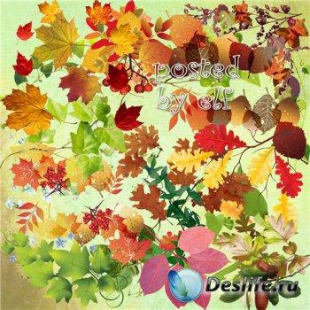 Клипарт без фона - Желтый, красный листопад – листья по ветру летят