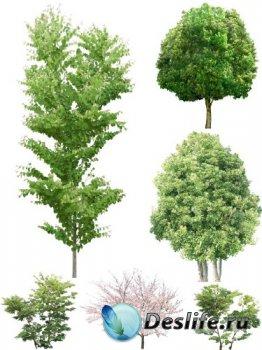 Большая подборка деревьев на прозрачном фоне (часть первая)