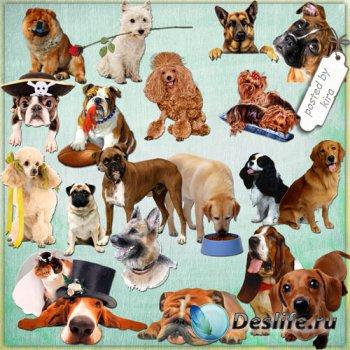 Клипарт на прозрачном фоне - Собаки и собачки разных пород