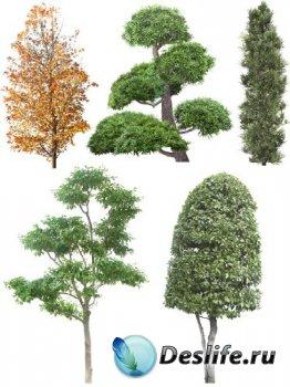 Большая подборка деревьев на прозрачном фоне (часть вторая)