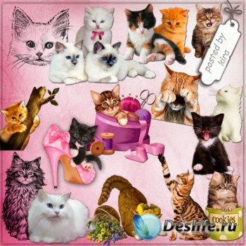 Клипарт на прозрачном фоне - Коты, кошки и котята