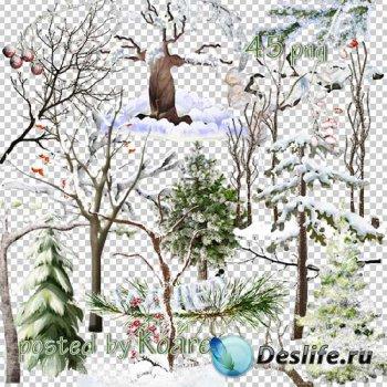 Клипарт png на прозрачном фоне для дизайна - Зимние деревья и ветки