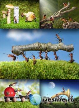 Трудолюбивые муравьи (подборка изображений)