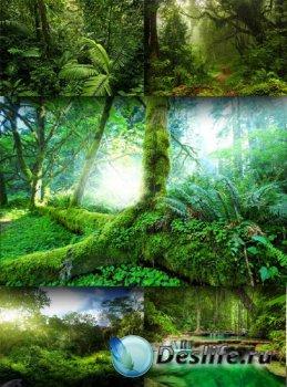 Непроходимые джунгли и тропические леса (подборка изображений)