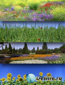 Поля и луга, цветы и трава - панорамные изображения (подборка)