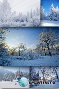 Зимние лесные фото - пейзажи