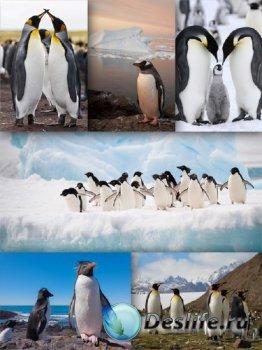Пингвины - птицы антарктиды (подборка)