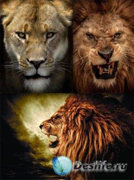 Львы, львицы и львята (подборка хищников)