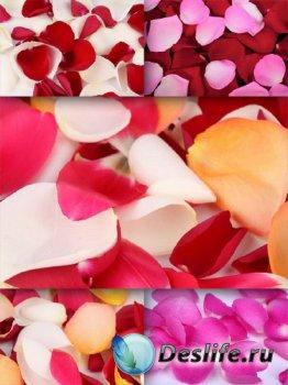 Лепестки прекрасных роз (подборка изображений)