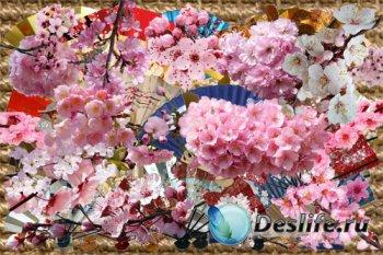Клипарт - Японские веера и ветки сакуры