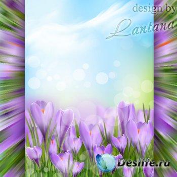 PSD исходник - Расцветает он весной - шафран цветочек озорной