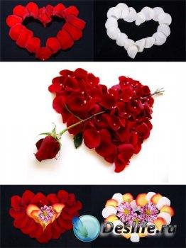 Сердечки из лепестков роз (подборка)