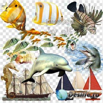 Морской клипарт в png