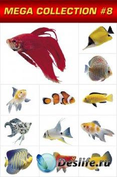 Мега коллекция №6: Аквриумные рыбки (прозрачный фон)