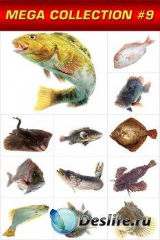 Мега коллекция №9: Морская рыба