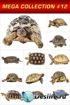 Мега коллекция №12: Черепахи